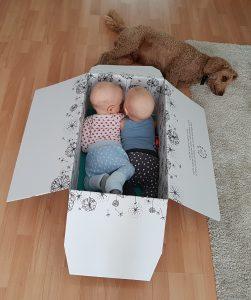 Die Minikatzen sind schon eingepackt. Hund Happy wollte nicht mit in den Karton. Dabei wird er am allermeisten vom Umzug profitieren.